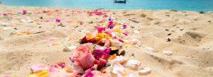 砂浜に撒かれた美しい花びら