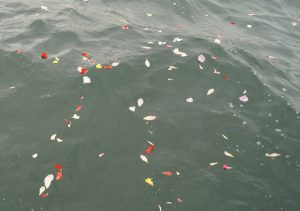 海面に漂う花びら