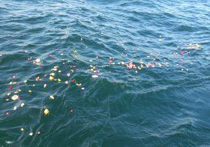 散骨セレモニーで献花され海面を漂う色とりどりの花びら