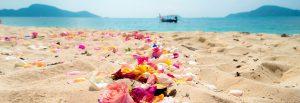 美しい花が撒かれた海岸と海
