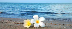 波打ち際に置かれた美しい2輪の花