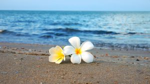 波打ち際の美しい2輪の花