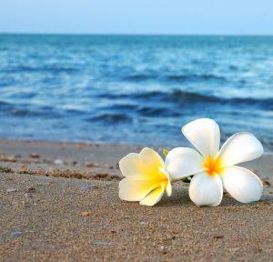 海岸に置かれた2輪の美しい花