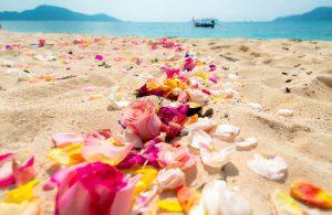 色とりどりの美しい花が撒かれた海岸