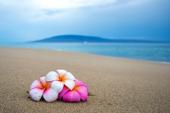 海岸に置かれた美しい3輪の花