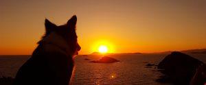 海に沈む夕日を眺める大型犬