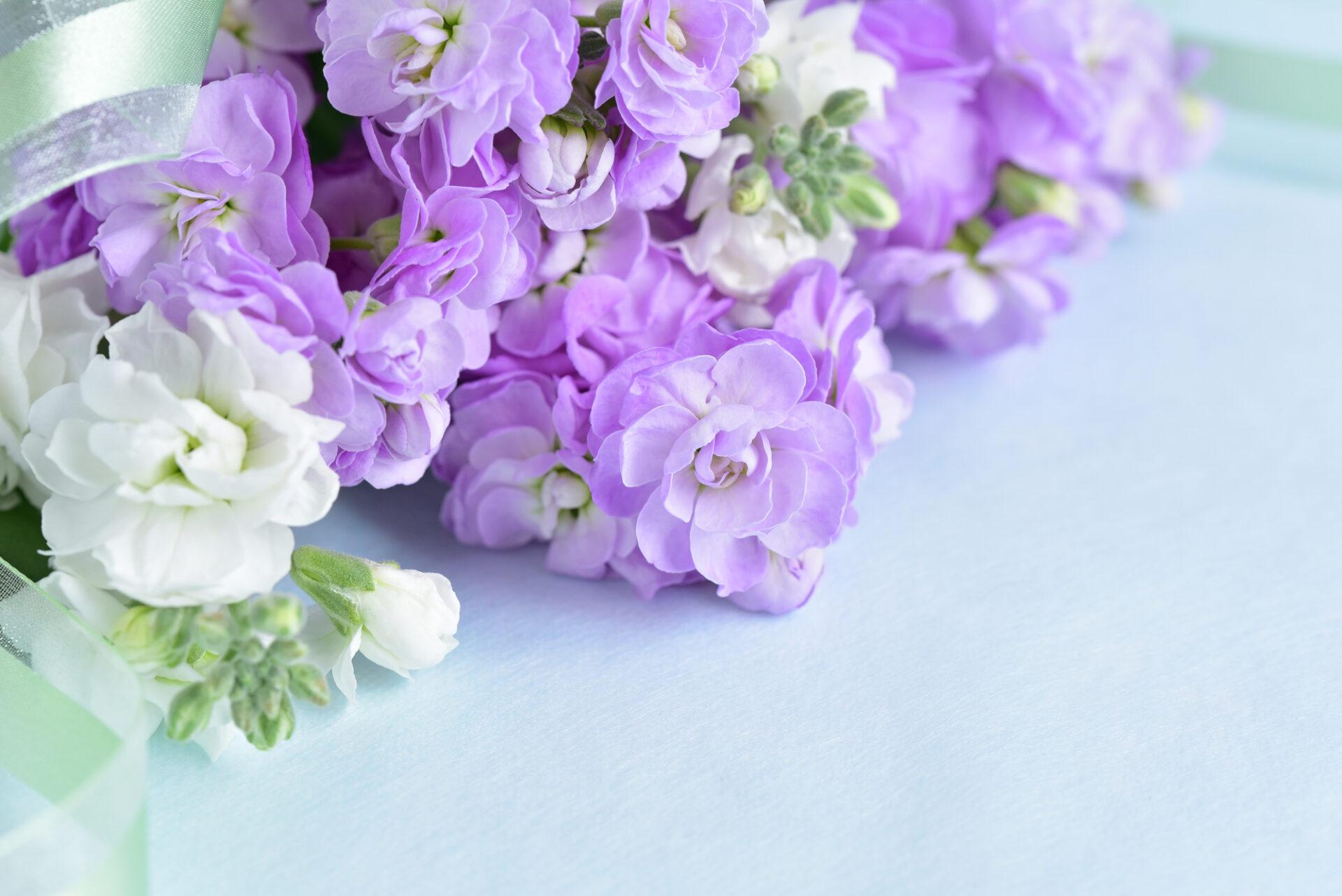 紫と白の切り花