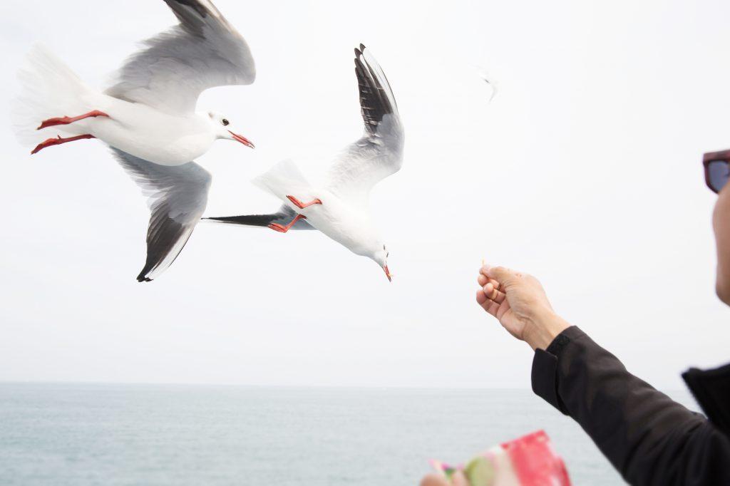鳥に餌をあげている様子