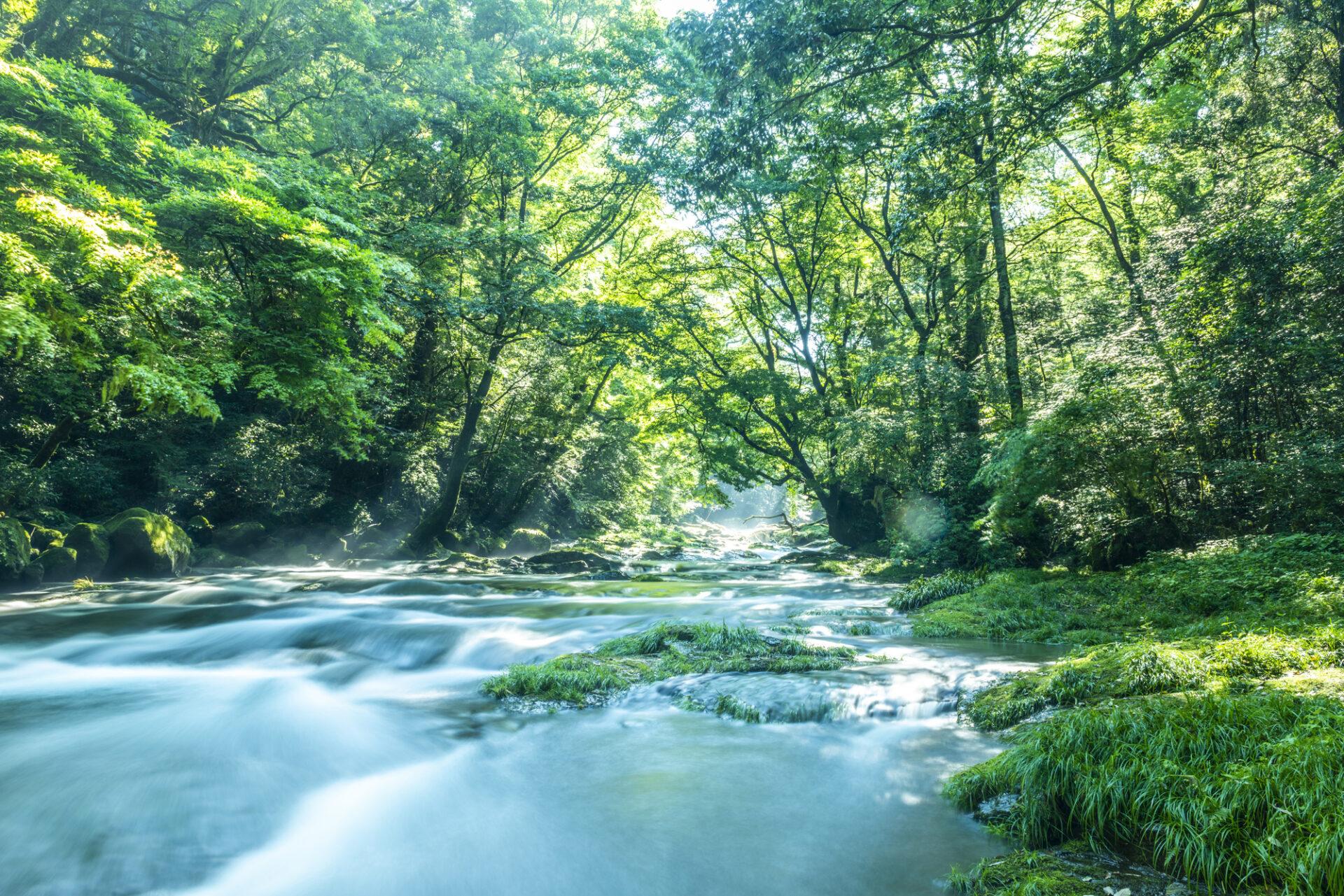 大自然と流れる川