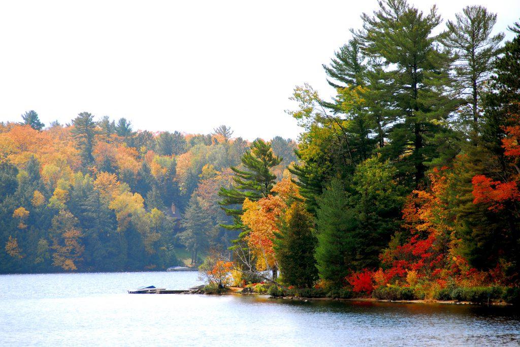 木々に囲まれた湖