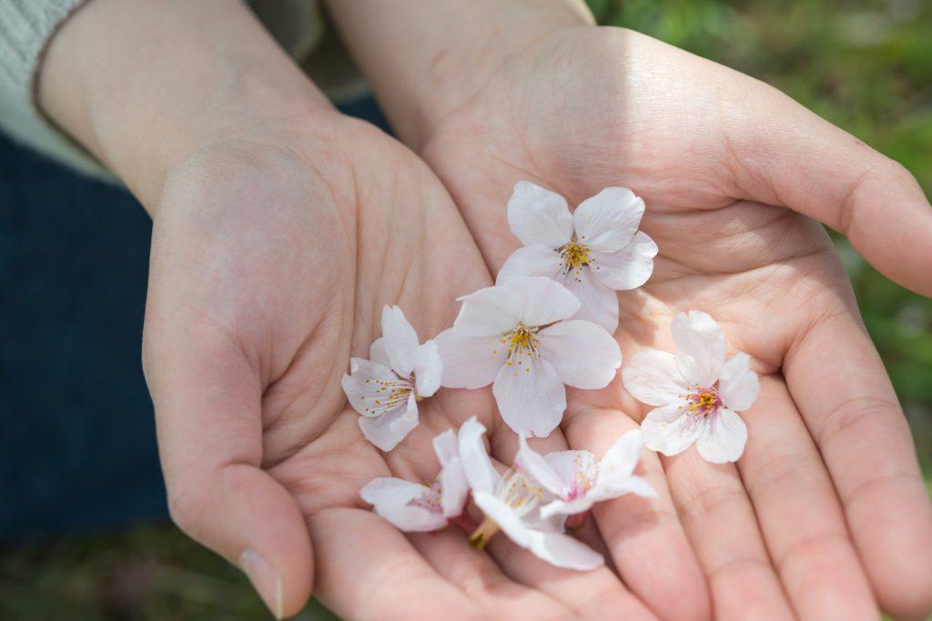 手のひらに乗せた花びら