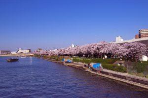 満開の桜と川