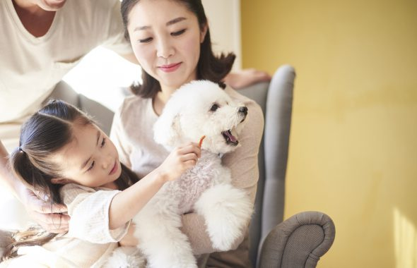 白い犬と家族