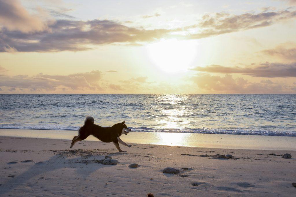 波打ち際を走る犬