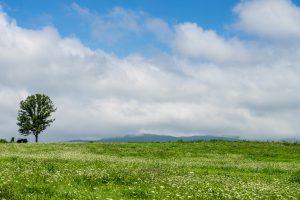 広い野原に大きな木が1本立っている