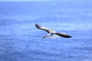 海上を飛ぶかもめ