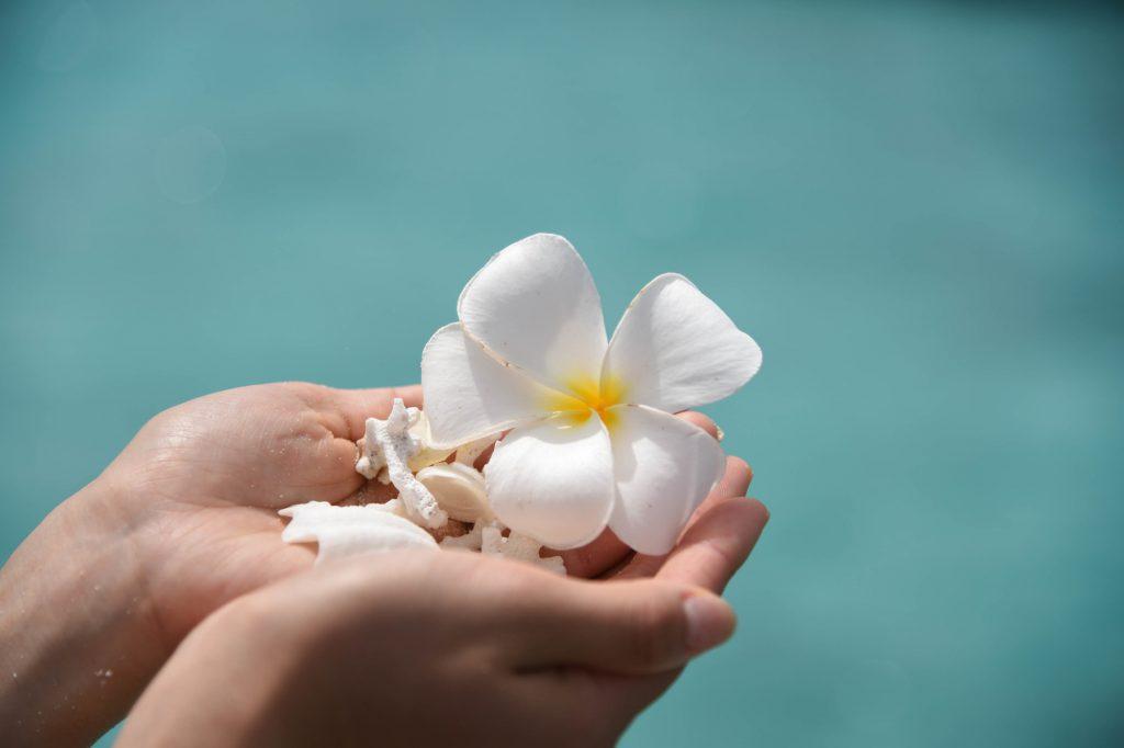 手に乗せた貝と花