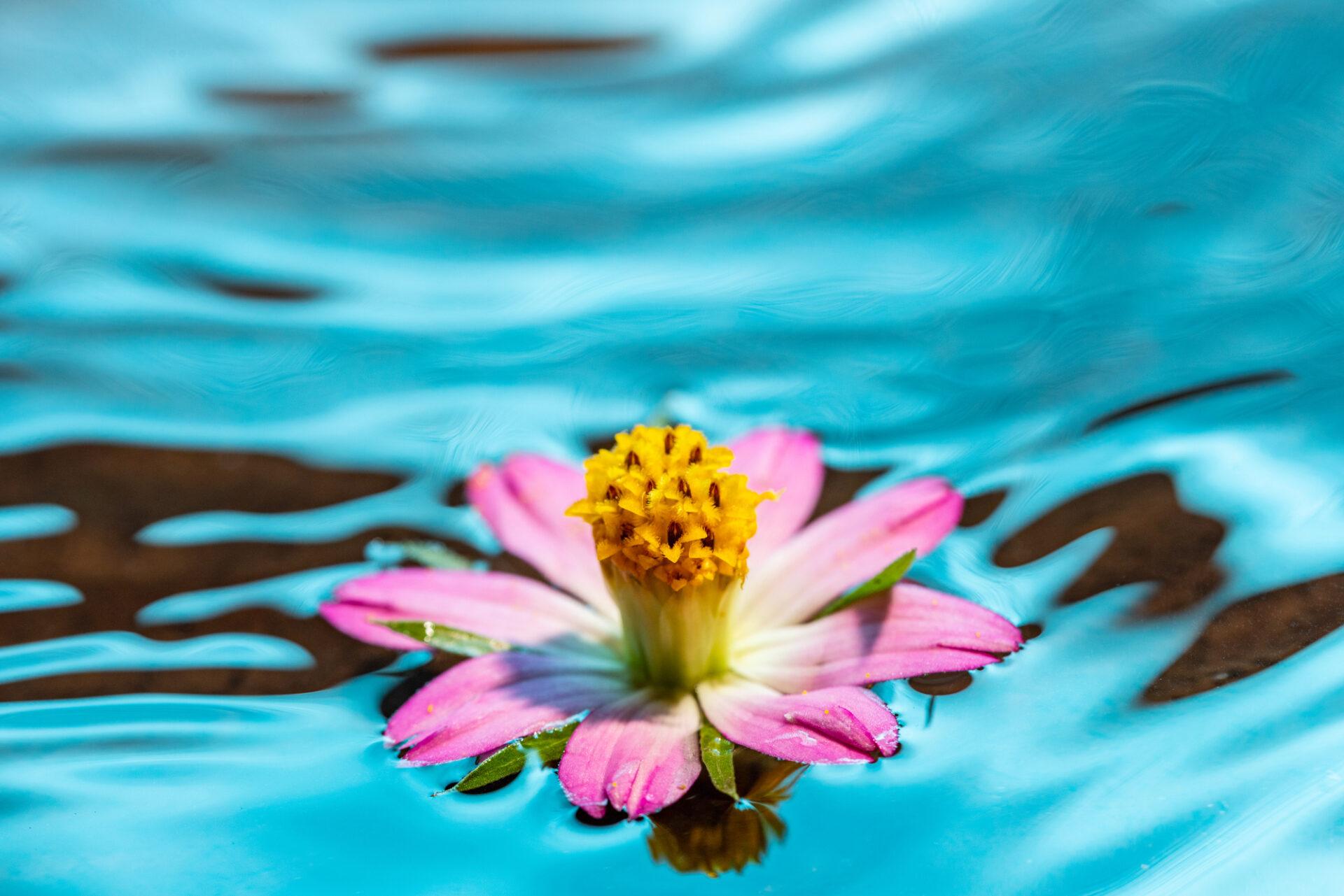 水の上に浮く花