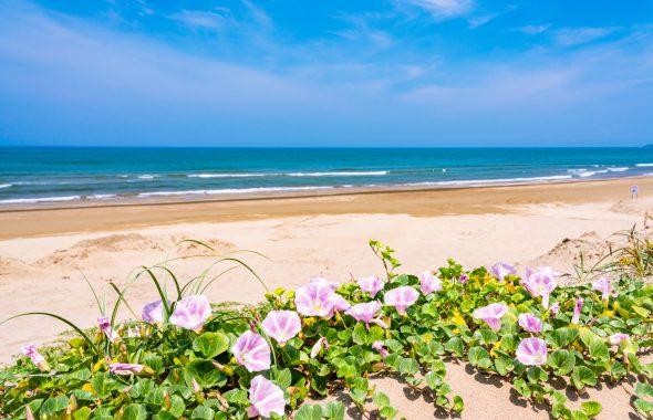 広い海と浜辺に咲く紫の花