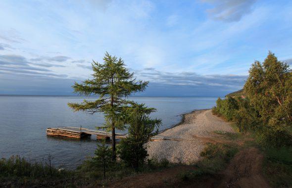 松の木と海