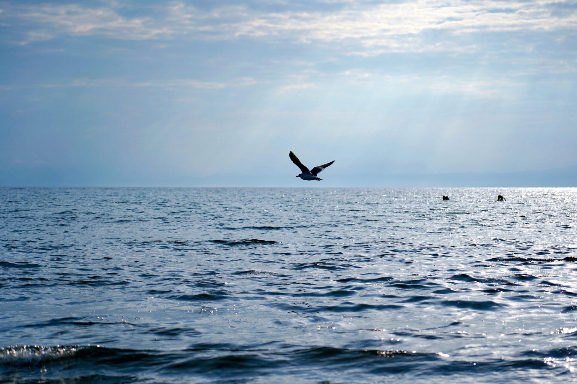 広い海の上を飛ぶかもめ
