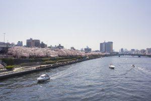 桜並木が美しい隅田川