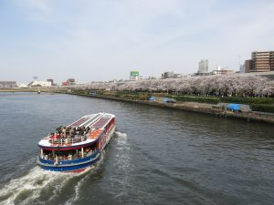 隅田川沿いの桜を見ながらクルージング