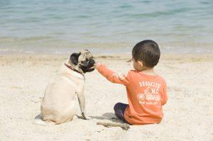 砂浜に座る子供と犬