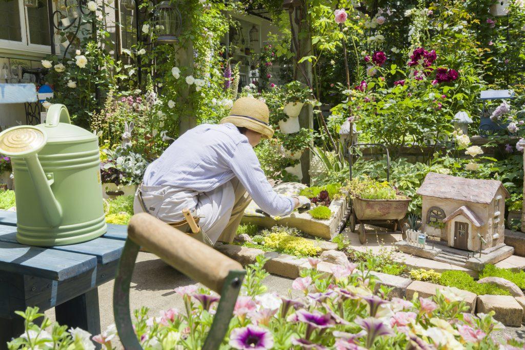 庭で植物を育てる弾性