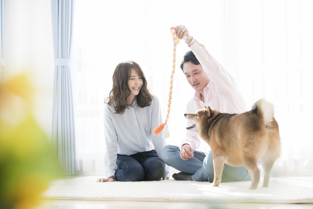 夫婦と柴犬が遊ぶシーン