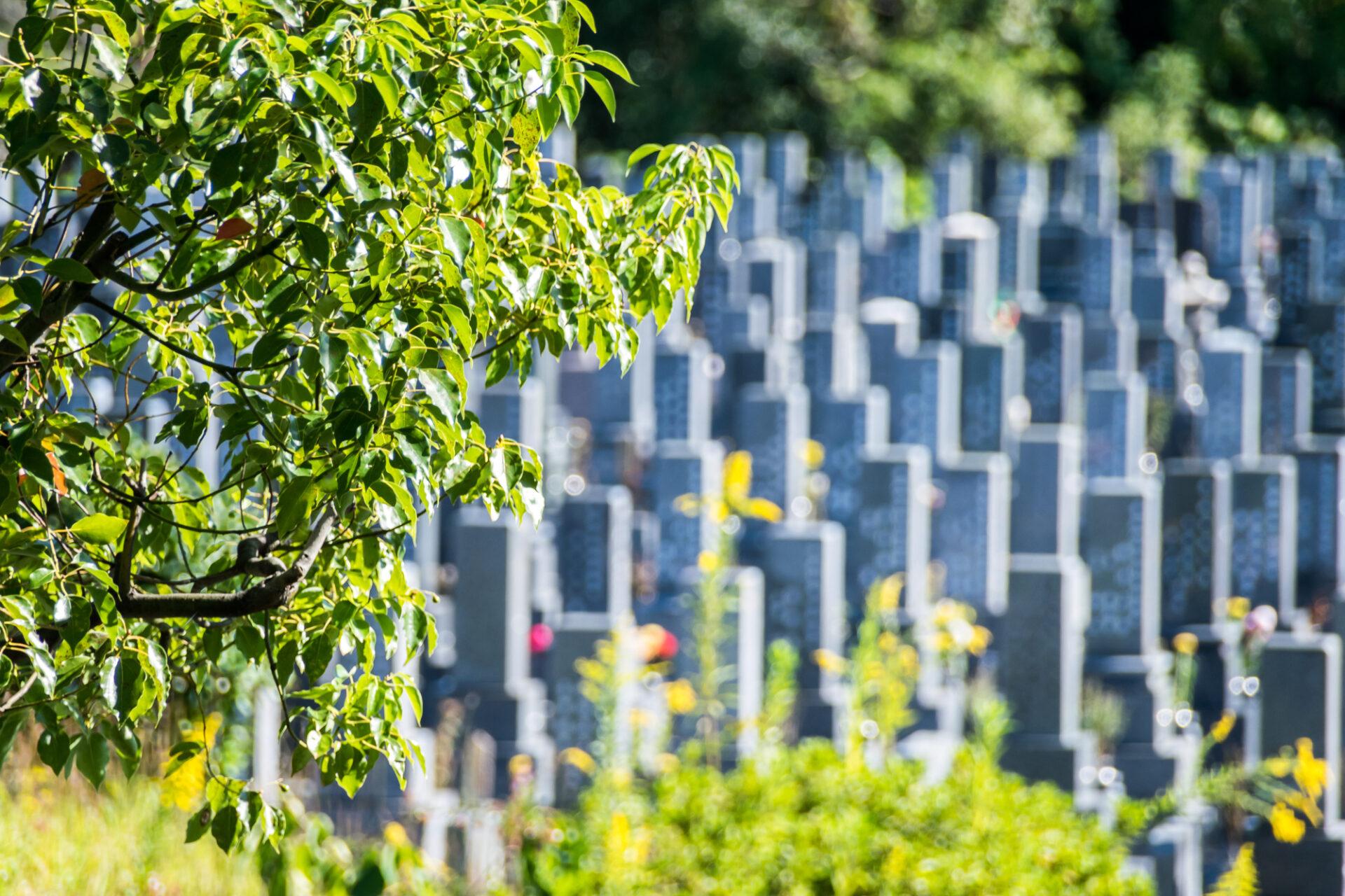 樹木の中にあるお墓