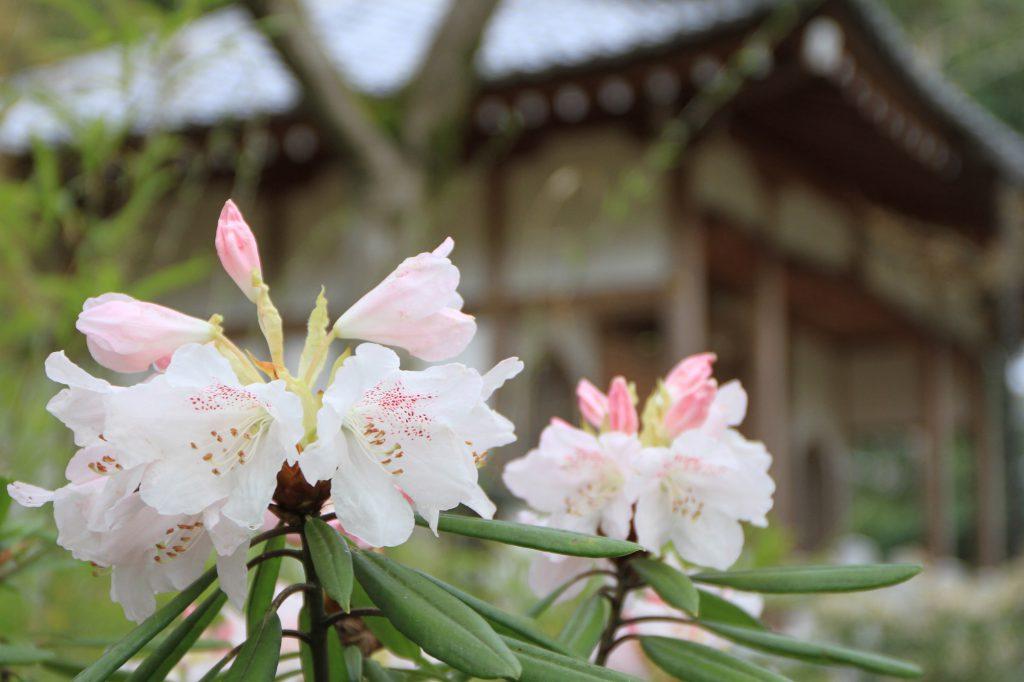 墓地の入り口に咲く花