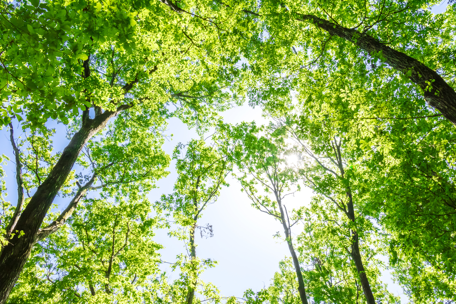 木に囲まれた場所